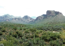 Beautiful Arizona Desert