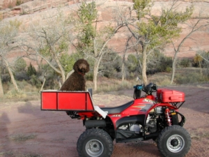 Mattie in Her Spot on the ATV