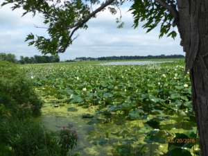 Lilly Lake in the Amana Colonies