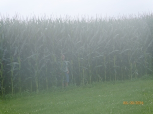 Field of Dreams - Monty Stepping Out of Corn