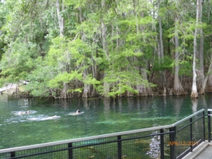 The Manatee Spring Swimming Hole