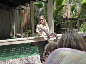 Wildlife Docent Hold a Baby Alligator